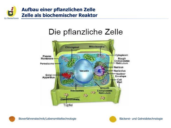 Aufbau einer pflanzlichen Zelle