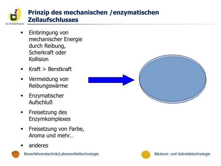 Prinzip des mechanischen /enzymatischen Zellaufschlusses