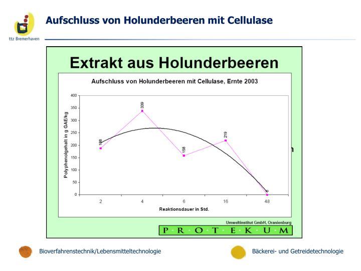Aufschluss von Holunderbeeren mit