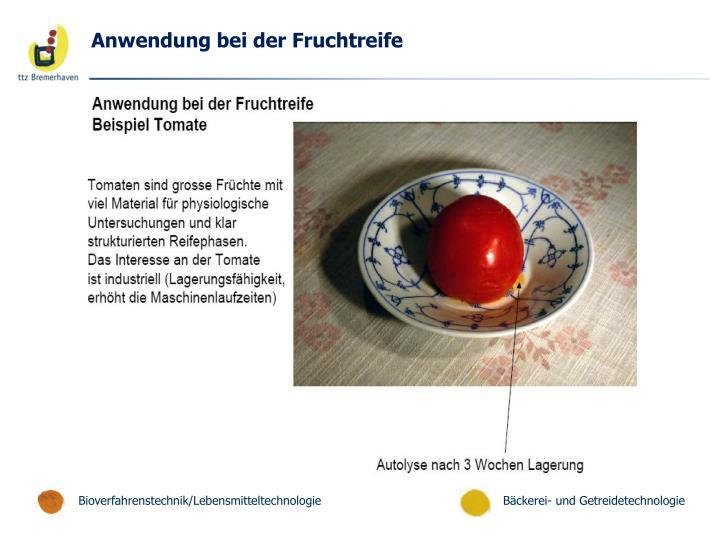 Anwendung bei der Fruchtreife