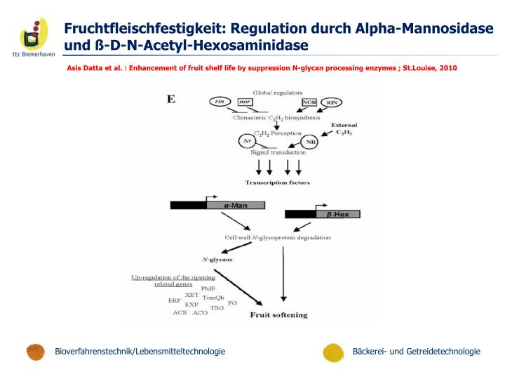 Fruchtfleischfestigkeit: Regulation durch Alpha-