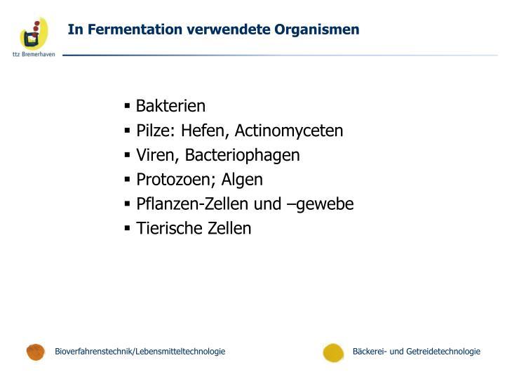 In Fermentation verwendete Organismen