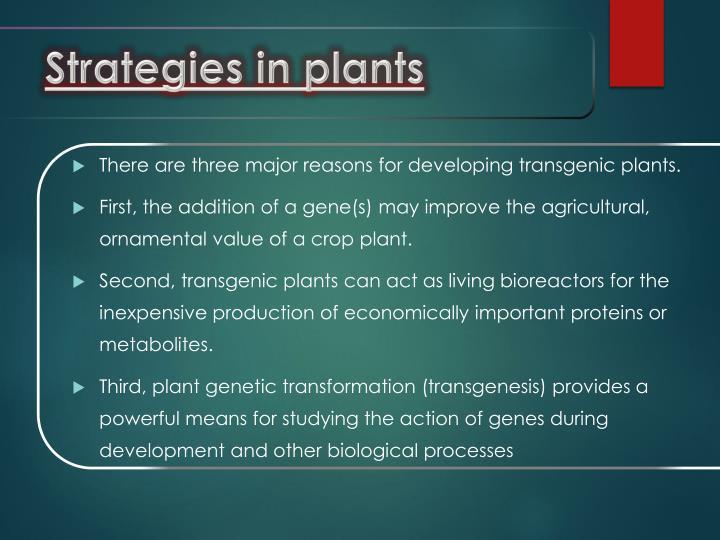 Strategies in plants