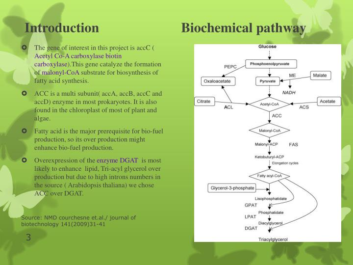 Introduction biochemical pathway
