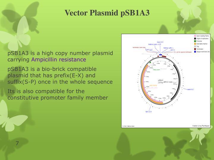 Vector Plasmid pSB1A3