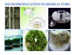 micropropagation in bioreactors