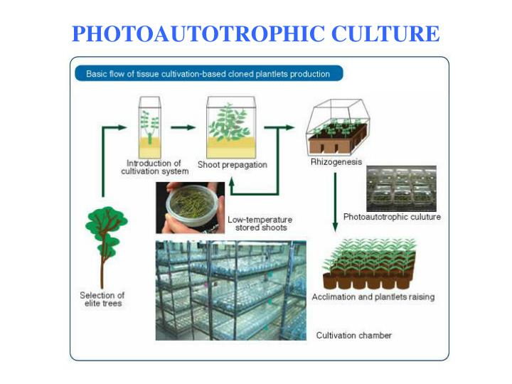 how to make tissue culture plants
