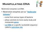 manipulating dna1