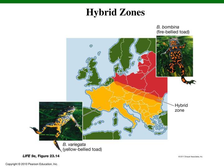 Hybrid Zones