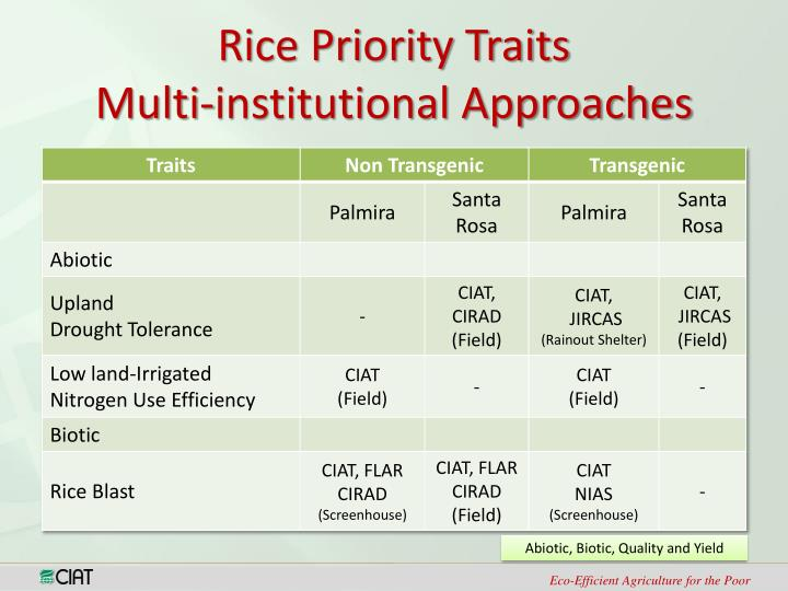 Rice Priority Traits