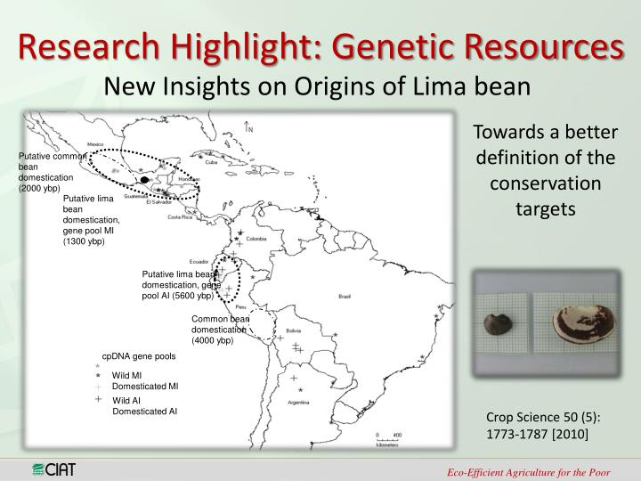 Putative common bean domestication (2000