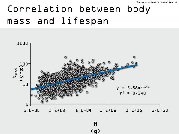 Correlation between body mass and lifespan