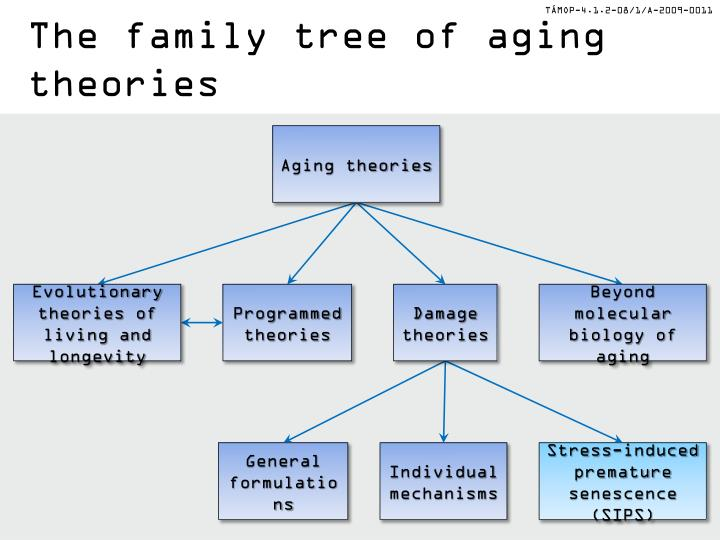 The family tree of aging theories