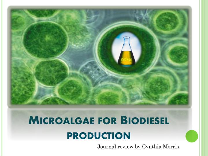 Microalgae for biodiesel production