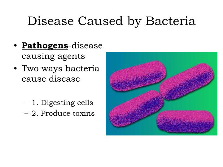 what is a virus that attacks bacteria