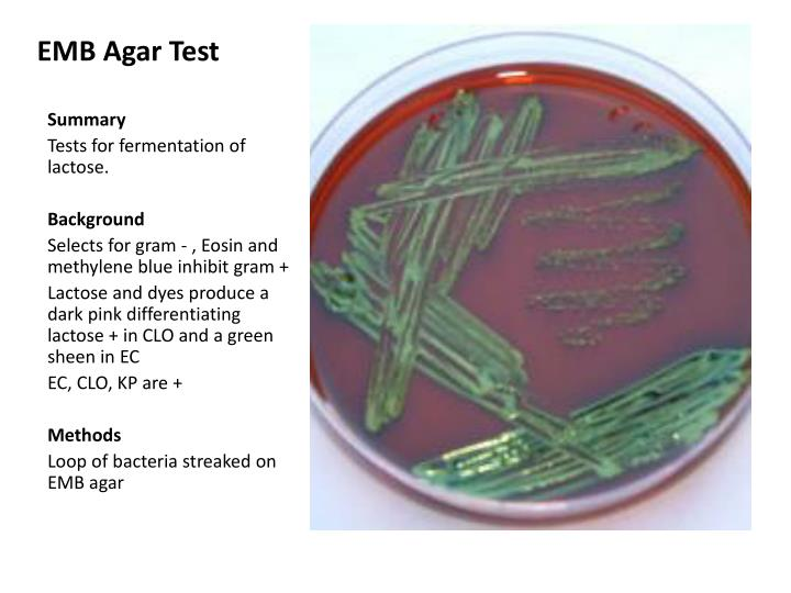 EMB Agar Test