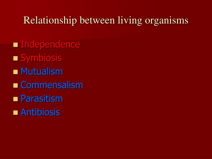 Relationship between living organisms