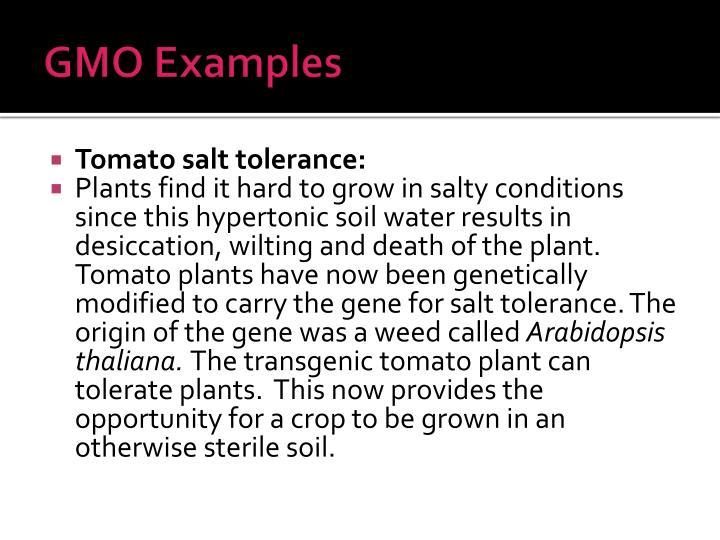 GMO Examples