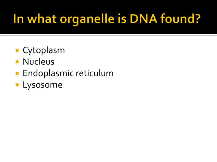 In what organelle is DNA found?