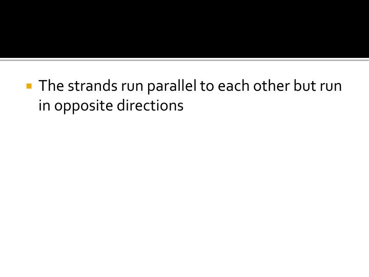 The strands run parallel to each other but run in opposite directions