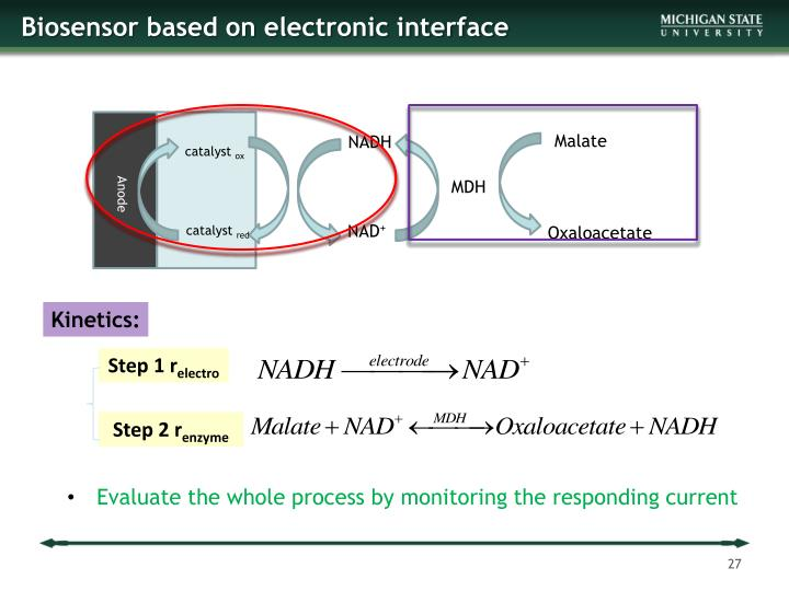 Biosensor based on electronic interface