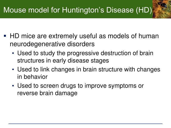 Mouse model for Huntington's Disease (HD)