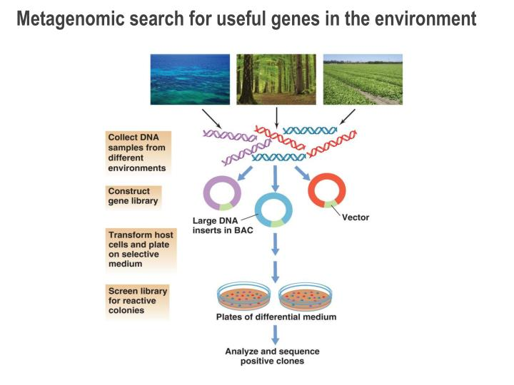 Metagenomic