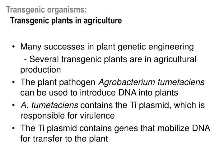 Transgenic organisms: