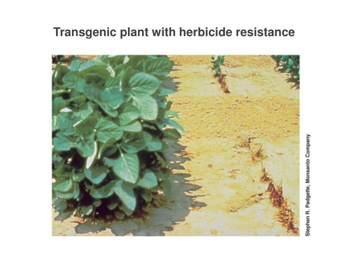 Transgenic plant with herbicide resistance