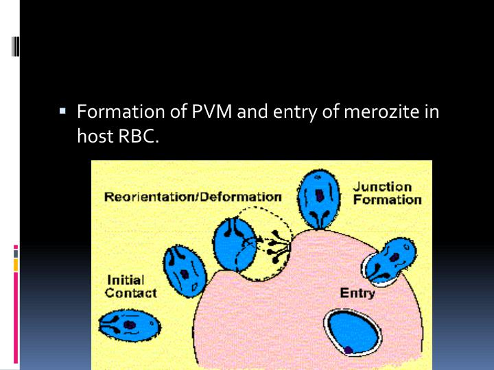 Formation of PVM and entry of