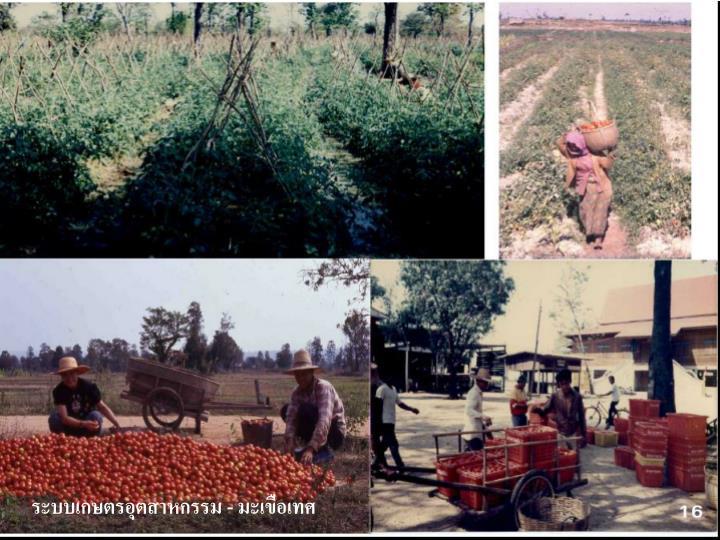 ระบบเกษตรอุตสาหกรรม
