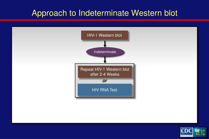 Approach to Indeterminate Western blot