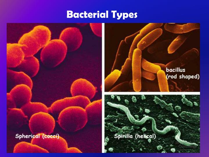 Bacterial Types