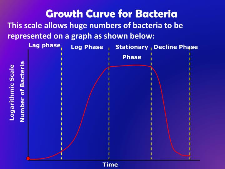 Growth Curve for Bacteria