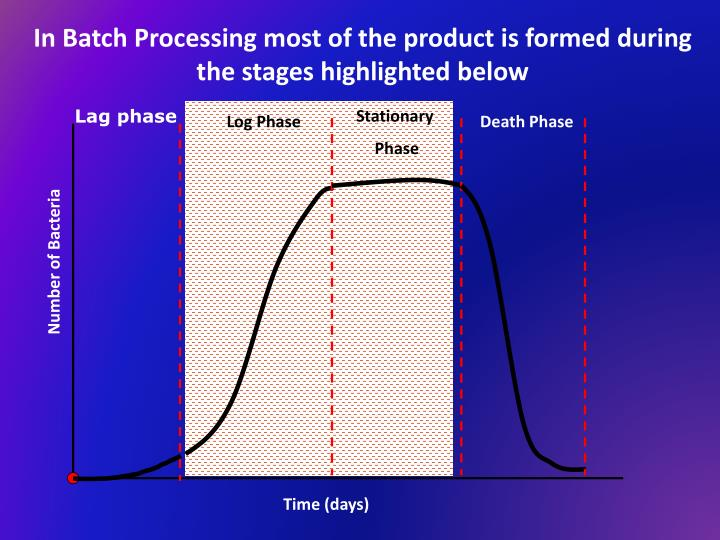 In Batch Processing most of the product is formed during the stages highlighted below