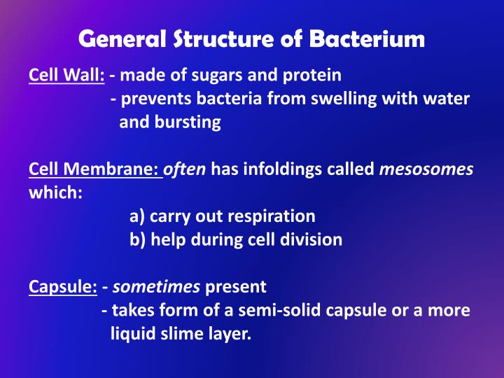 General Structure of Bacterium