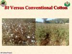 bt versus conventional cotton