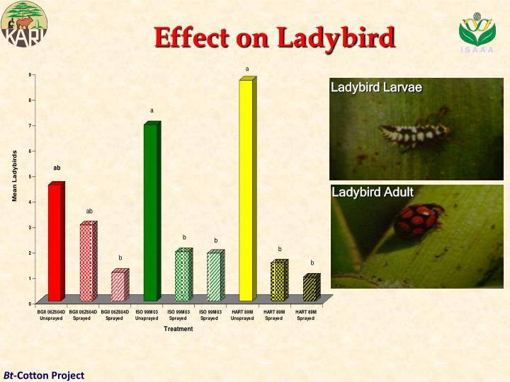 Effect on Ladybird