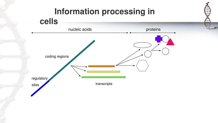 Information processing in cells