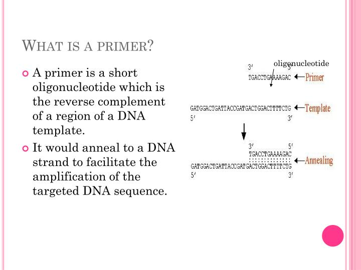 What is a primer?