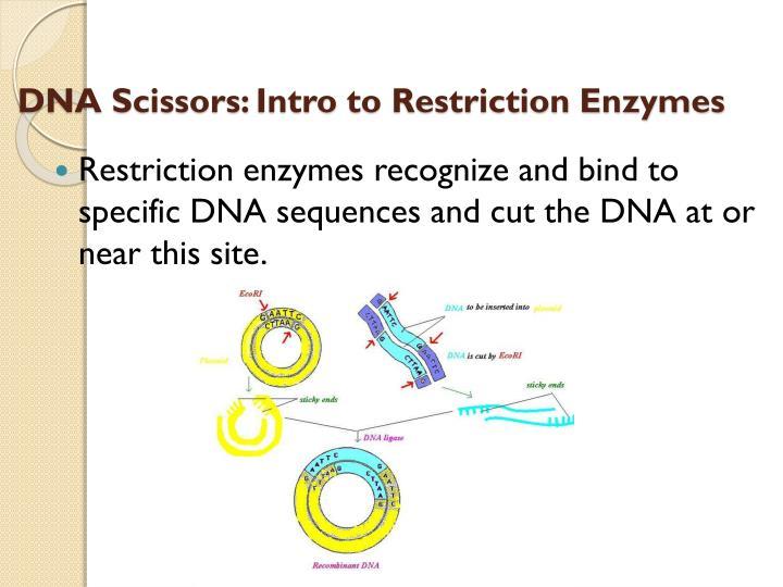 DNA Scissors:
