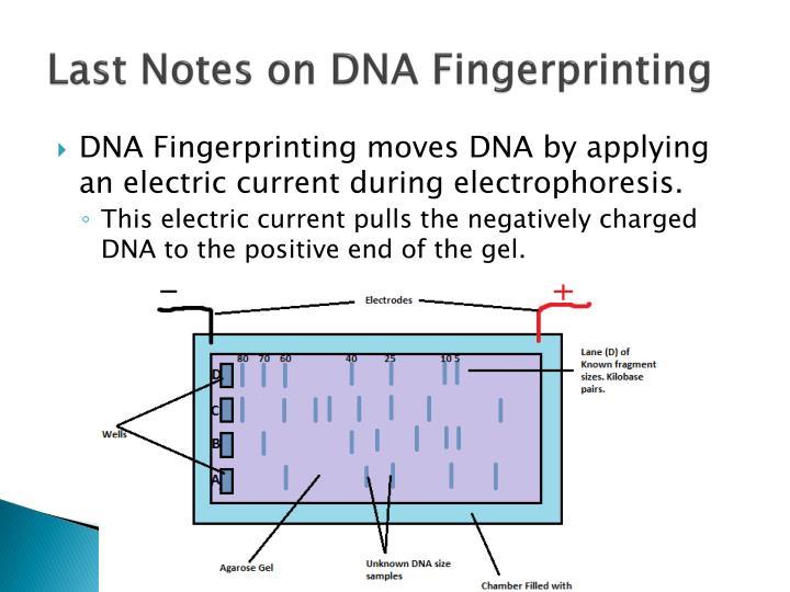 Last Notes on DNA Fingerprinting