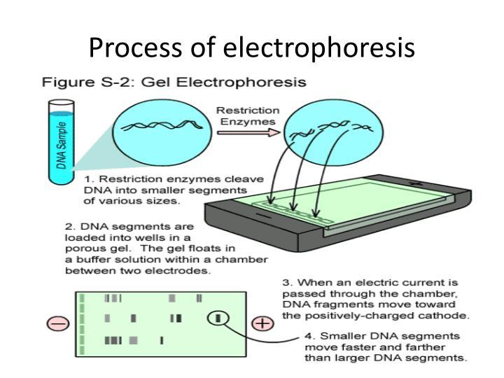 Process of electrophoresis