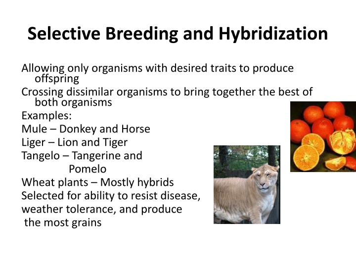 Selective Breeding and Hybridization
