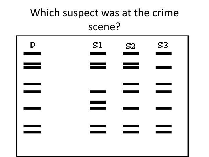 Which suspect was at the crime scene?
