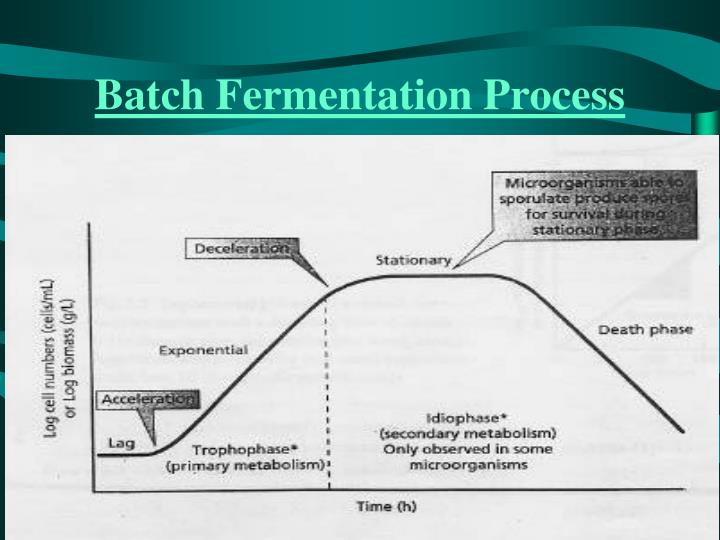 Batch Fermentation Process