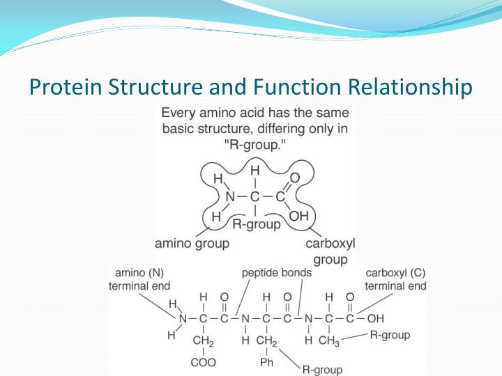 the structure and function relationships of Gtp-binding (g) proteins constitute a class of p-loop (phosphate-binding loop) proteins that work as molecular switches between the gdp-bound off and the gtp-bound on.