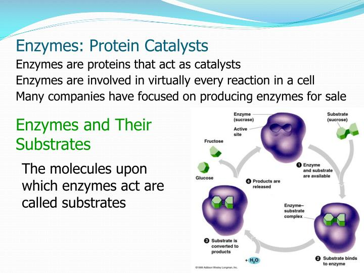an introduction to the importance of the proteins Post translational modifications: learn how simglycan software analyzes glycan and glycopeptide structures to facilitate the study of protein glycosylation.