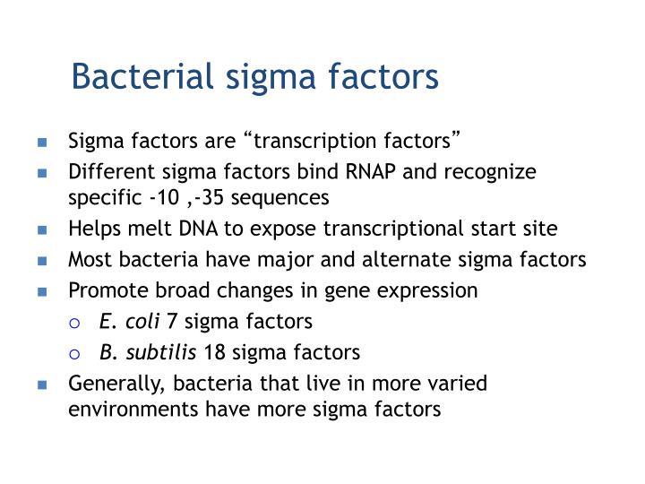Bacterial sigma factors