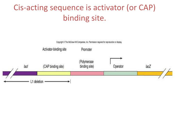 Cis-acting sequence is activator (or CAP) binding site.